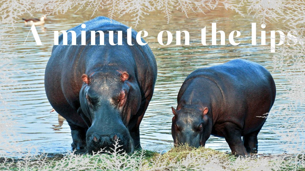 hippopotamus-1170205_1920