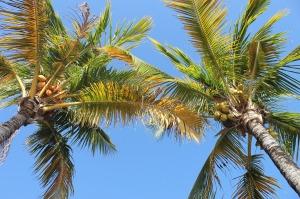 palm-1824505_1280